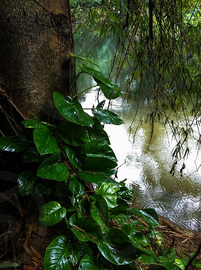 green leaves and body of water photo