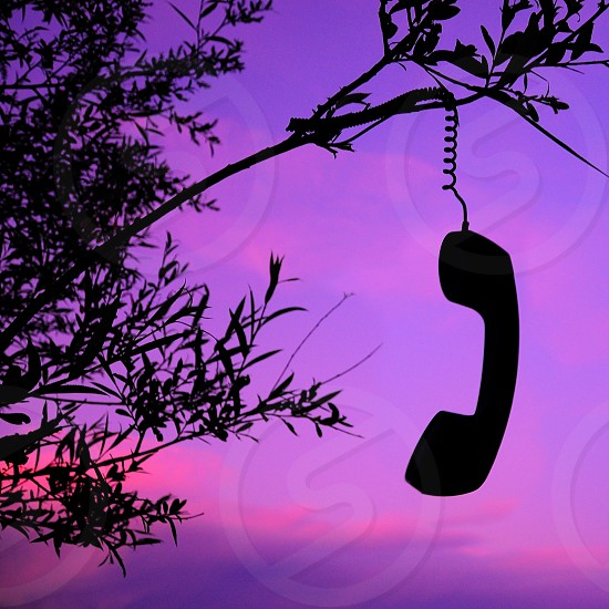 view of telephone on tree branch photo