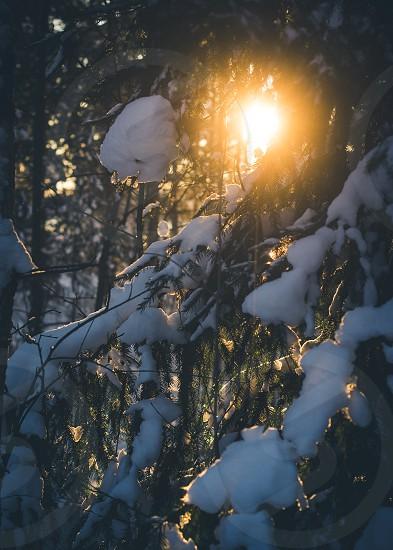 A winter sunset.  photo