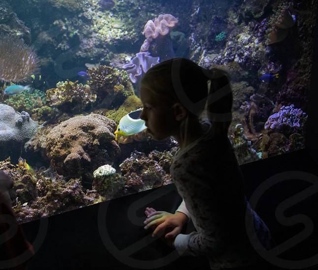 Child at aquarium photo