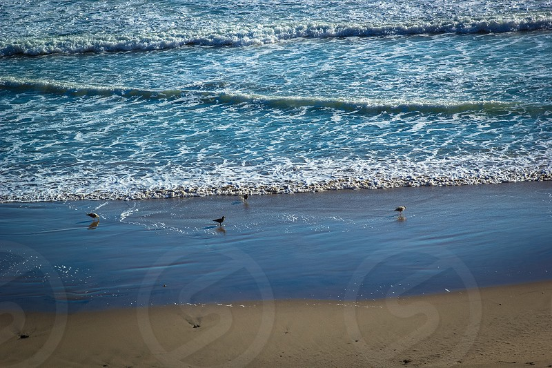 Birds on the shoreline in the waves beach photo