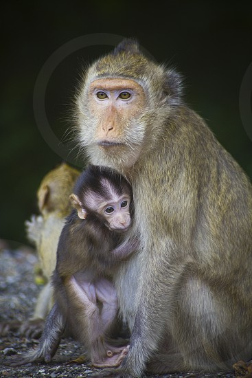 Portrait of wild animal parenting mother and baby monkey this was taken in the jungle of Thailand photo