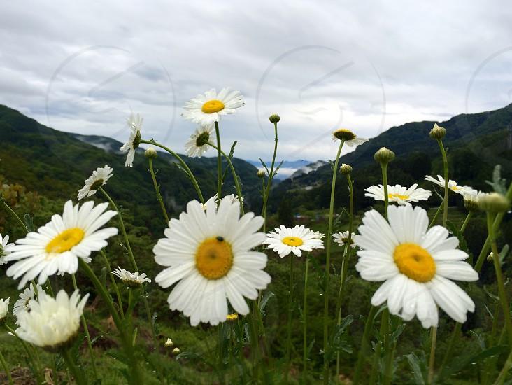 FLOWER&SKY photo
