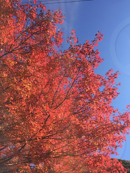red and yellow leafed tree during day time photo