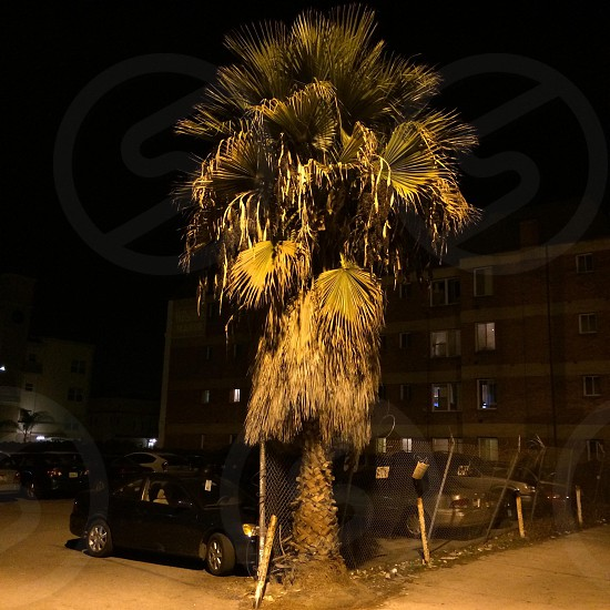 Palm in dark alley photo