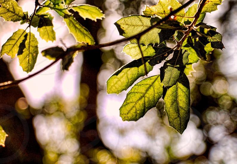green tree leaves in tilt shift lens photo