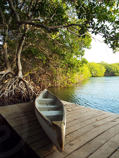 A solo white with wood trim canoe sitting on top of a wood dock in a mangrove lagoon. photo