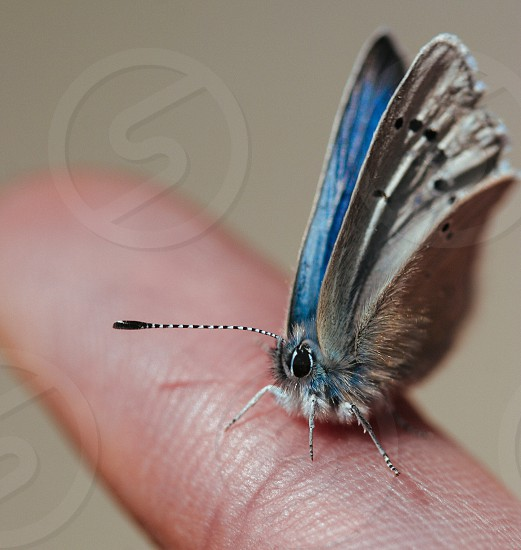blue white brown and black butterfly macro photograph photo