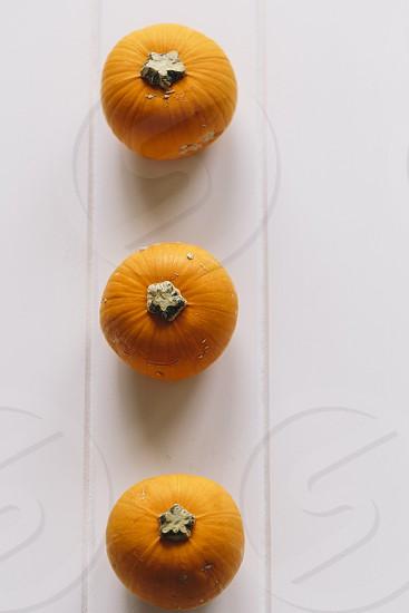 three 3 pumpkins pumpkin halloween thanksgiving copy space orange white background photo