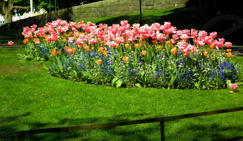 Spring colour colors flower flowers pink spring green plant plants orange bright blue sunny garden park. photo