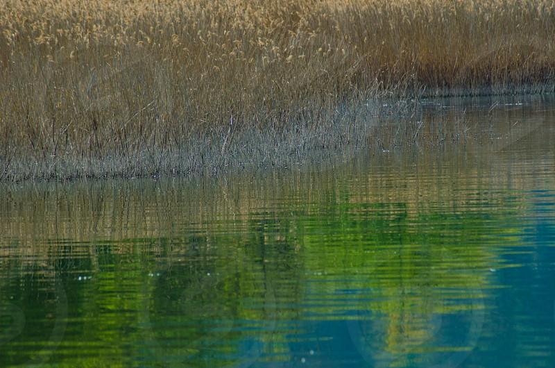 brown grass pond photo photo