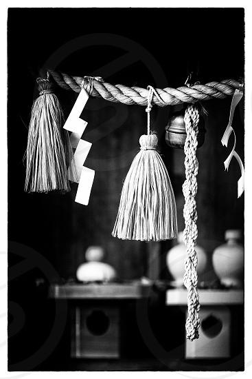 'お正月(2015)' (7) 'Shimenawa'  New Year Japanese New Year Japan Japanese Culture Shinto Shrine Hatsumōde Japanese Style New Years' Decoration Shimenawa Outdoor Daylight Traditional Event Orient Oriental Cultures & Ethnicities Black and White Monochrome Vertically long Longitudinally long  photo