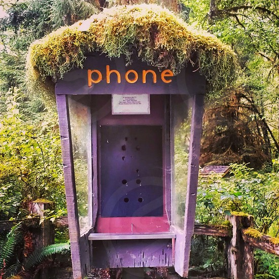 Phone hello moss old  photo