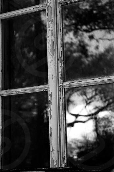 tree reflection on window photo