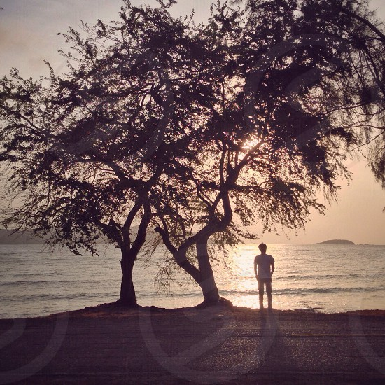 man in white t shirt standing beside 2 tall trees photo