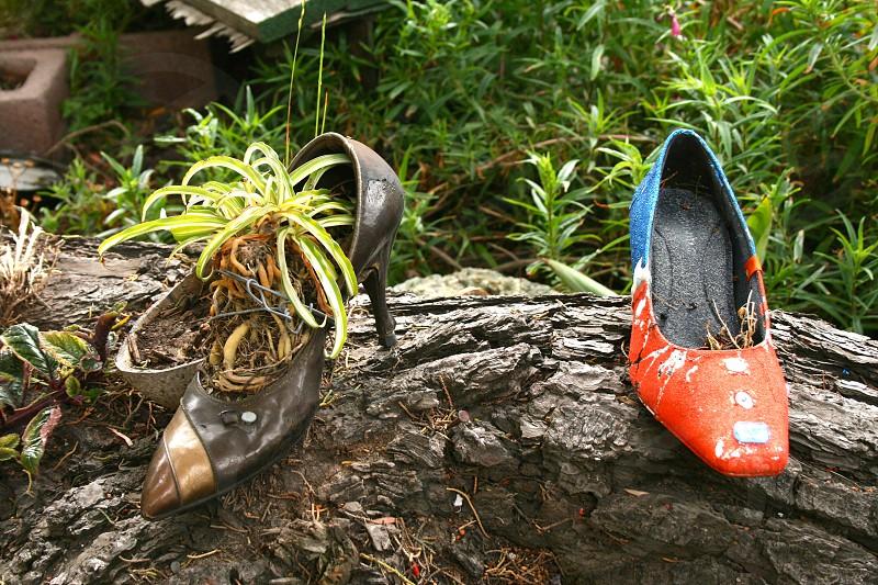 Shoes plants green photo