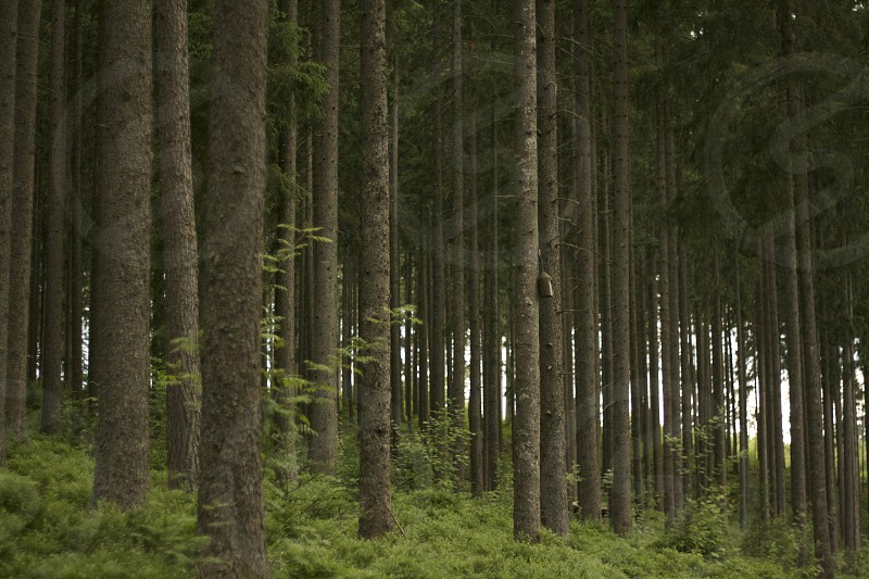 Many trees one forest. photo