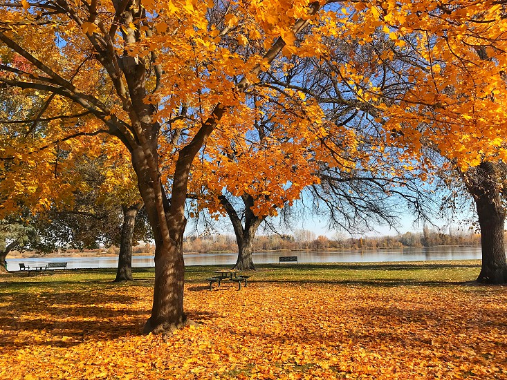 Fall in the park photo