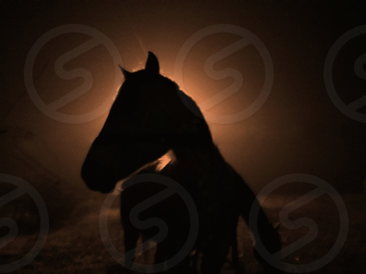 stallion and another horse silhouette photo