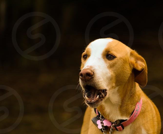 DogOutsideyawning photo