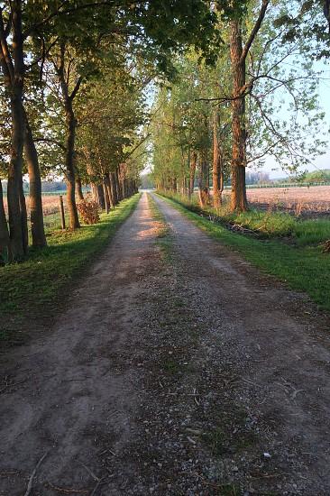 Lane way photo
