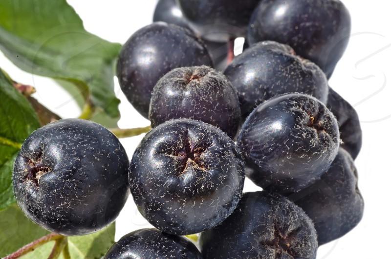 Black choke berry photo
