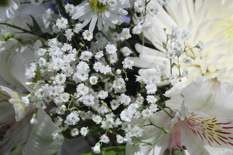 white daisy and white lily in bouquet photo