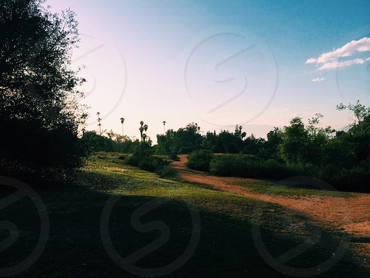 green tree lined  grass field photo