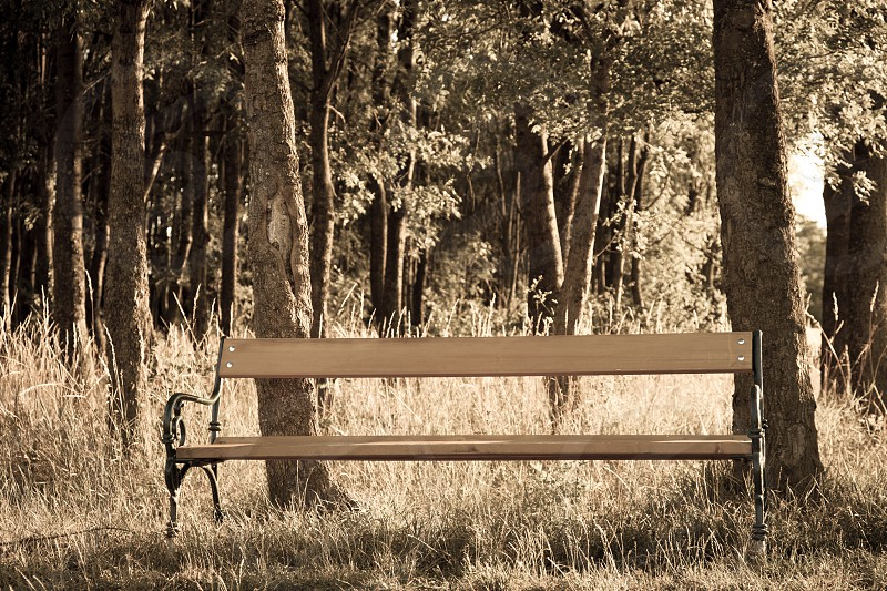 bench outdoor woods photo