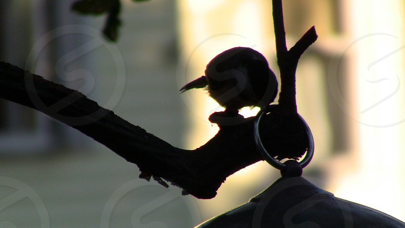 close up silhouette photography of hook photo