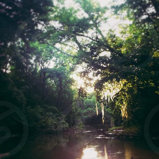 Alabama camping kayaking creek adventure sunlight moss  photo