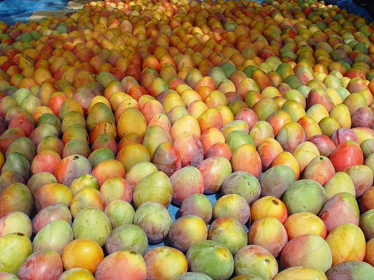 Mangoes. photo