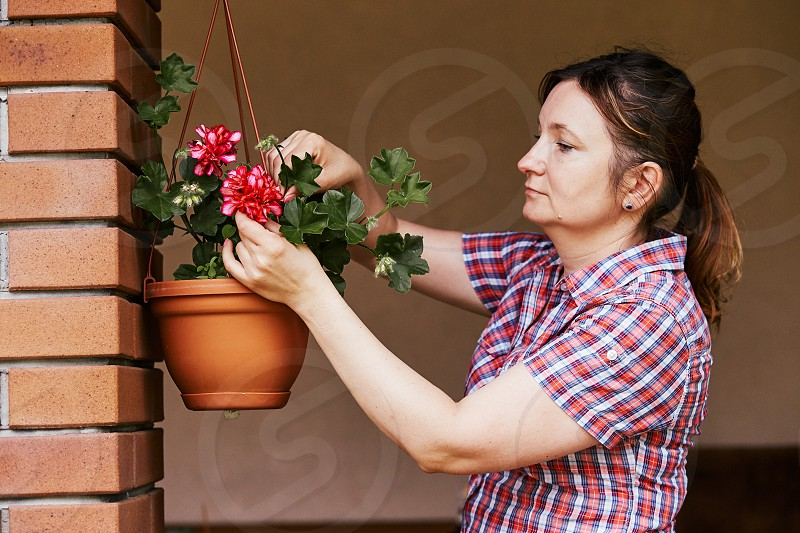 Woman arranging the flowers in a flower pot hanging on a patio. Candid people real moments authentic situations photo
