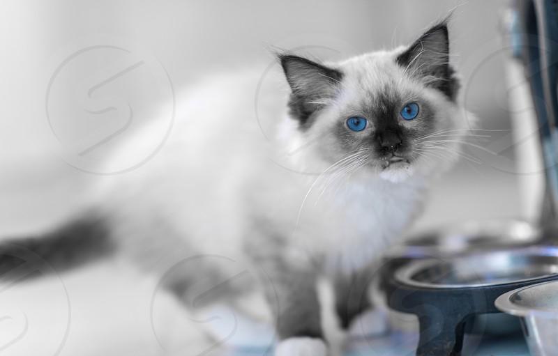 Blue 14 photo