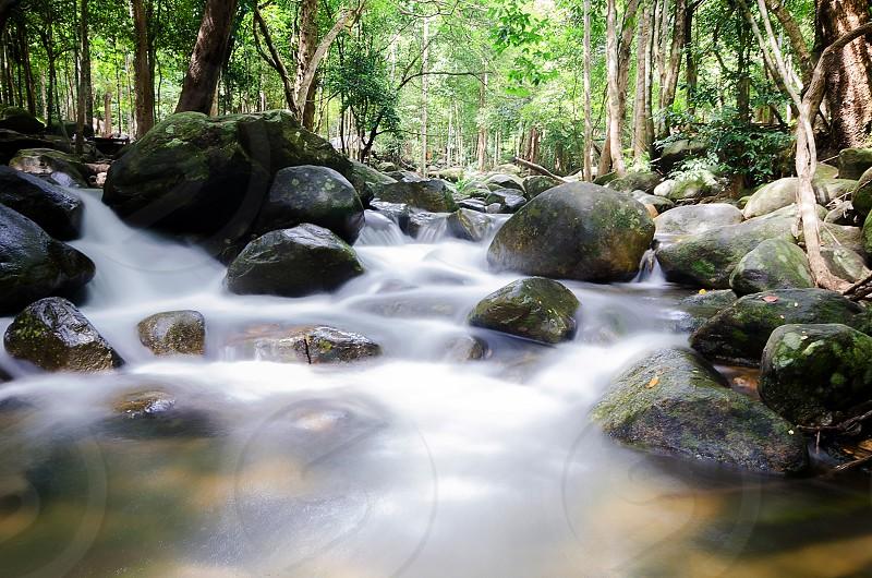 Waterfall natural tree wood green photo