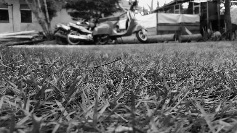Black - White photo
