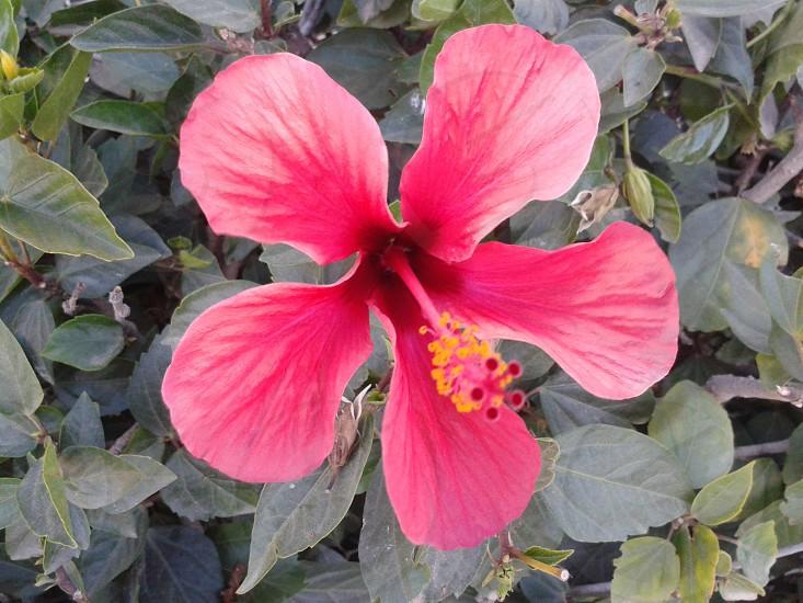 pertty rose flowerplantrosesflowers photo