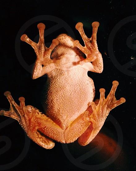 orange frog animal photograph photo