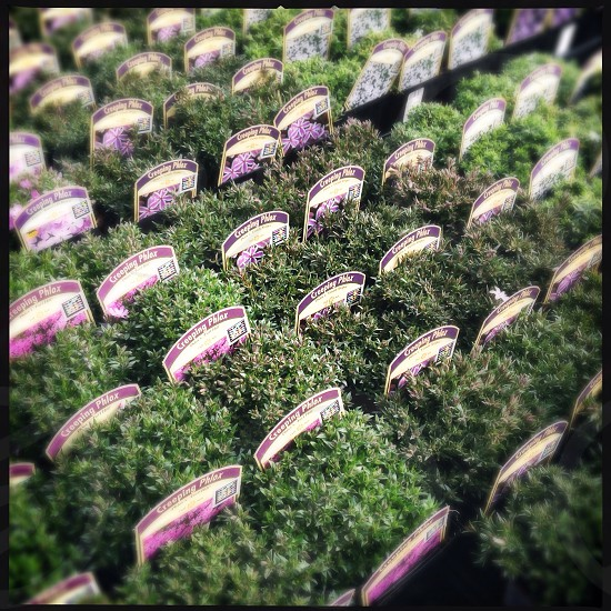 Close up of herbs  photo