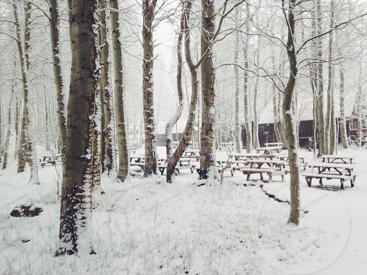 snow season photo