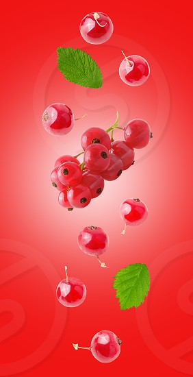 Flying fresh red currant with green leaves on pink background with clipping path as package design element and advertising. flatlay look minimalism. Concept of food levitation high resolution. photo