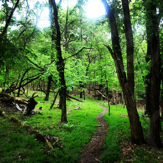 green forest view photo