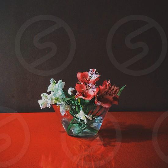 red indoor flower photo