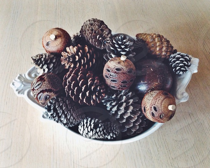 Pine Cone Collection photo
