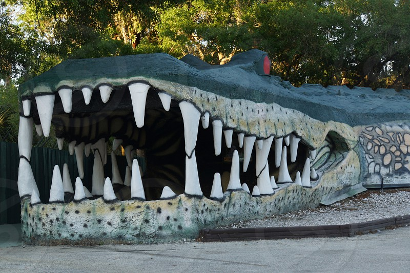 grey alligator designed cave photo