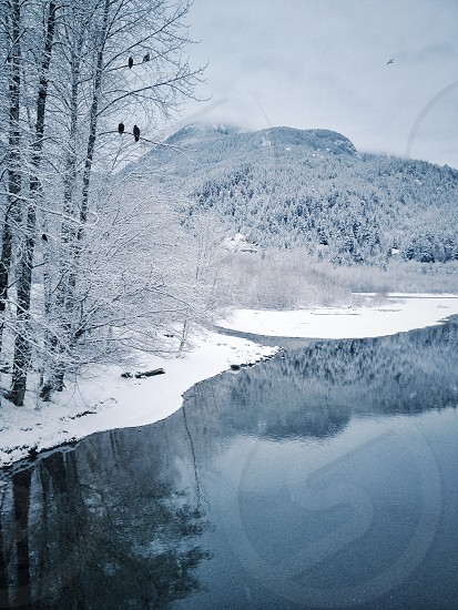 calm body of water near snow covered ground and icy bare trees with birds resting on branches overlooking snow-capped mountain under cloudy sky during daytime photo