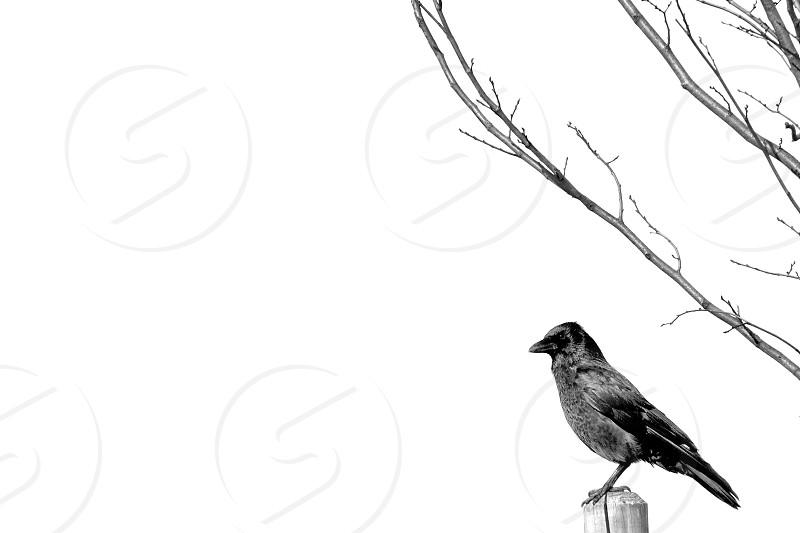 cardinal bird standing on top of post photo