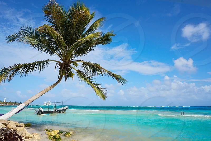 Mahahual Caribbean beach palm tree in Costa Maya of Mayan Mexico photo