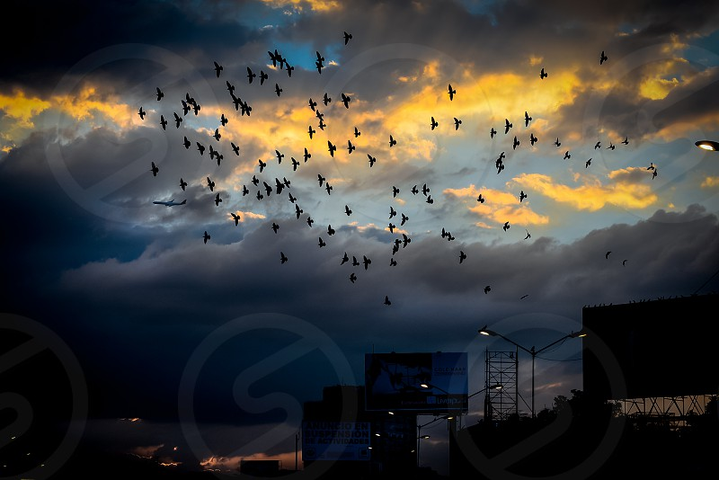 An airplane and the birds flying at the right moment with the sunset behind. photo