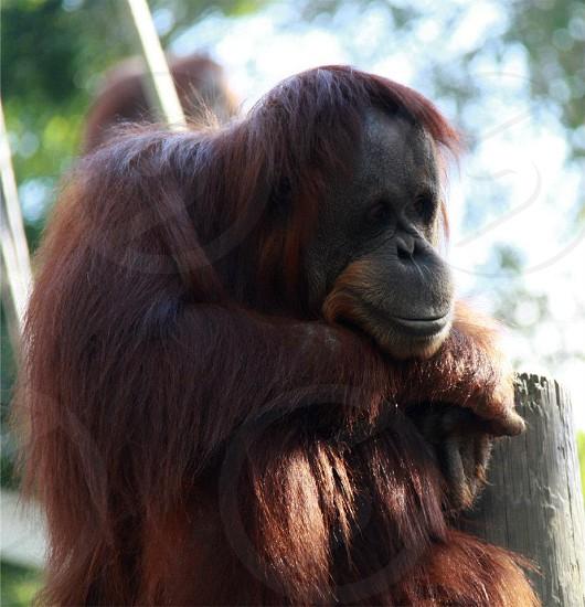 monkey at Como Zoo photo
